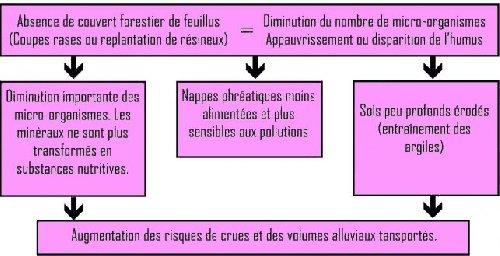 La centrale biomasse de tonnerre en question au nom de l conomie on veut d truire le capital - Detruire souche arbre rapidement ...